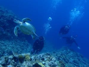 沖縄ダイビングチービシ諸島にて