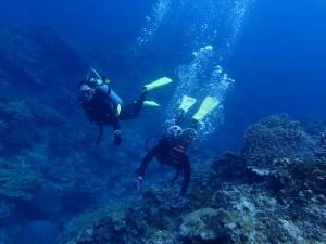 慶良間諸島ダイビングサンドトライアングルポイント