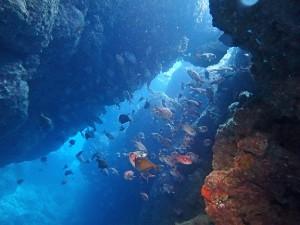 沖縄ダイビング北部