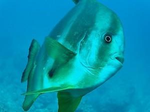 沖縄ダイビング体験