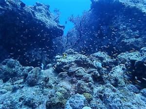 水納島,瀬底島ダイビング