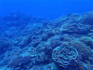 沖縄ダイビング水納島