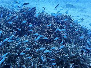 沖縄ダイビング瀬底島