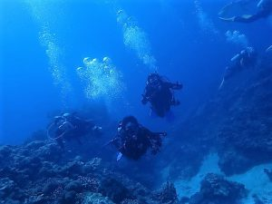 沖縄ダイビング慶良間