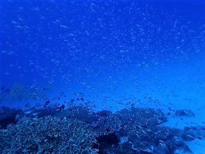 沖縄ファンダイビング水納島,瀬底島