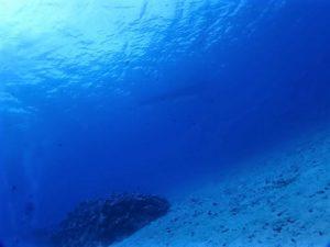沖縄水納島ファンダイビング