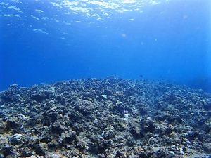 沖縄水納島・瀬底島ダイビング