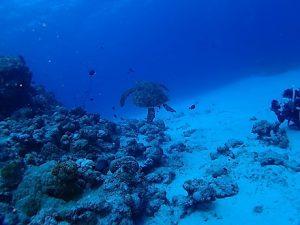 沖縄水納島ダイビング