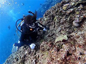沖縄ファンダイビング青の洞窟