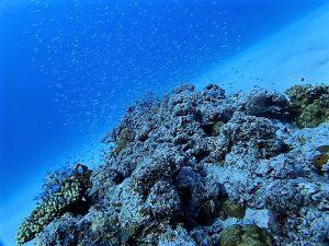 沖縄慶良間諸島ファンダイビング