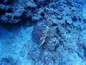 沖縄ダイビングライセンス講習水納島