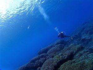 沖縄万座ファンダイビング