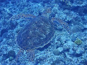 沖縄慶良間諸島ダイビング