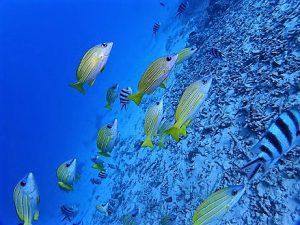 沖縄青の洞窟ダイビング