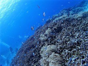 沖縄ダイビングアドバンスド講習真栄田岬